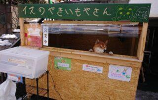 Giappone: Ken Kun il cane che gestisce una bancarella