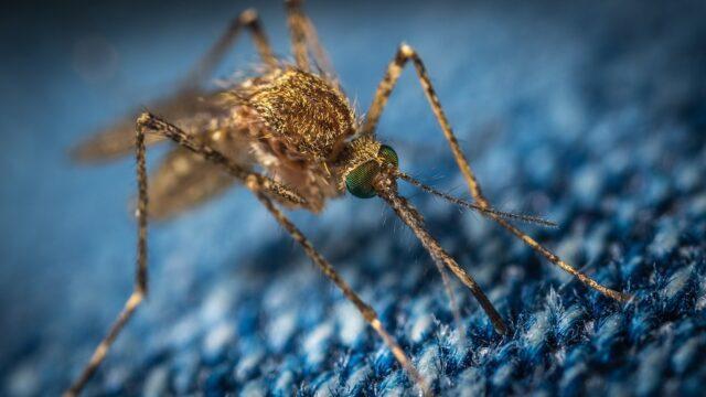 Perché-le-zanzare-pungono-solo-alcune-persone